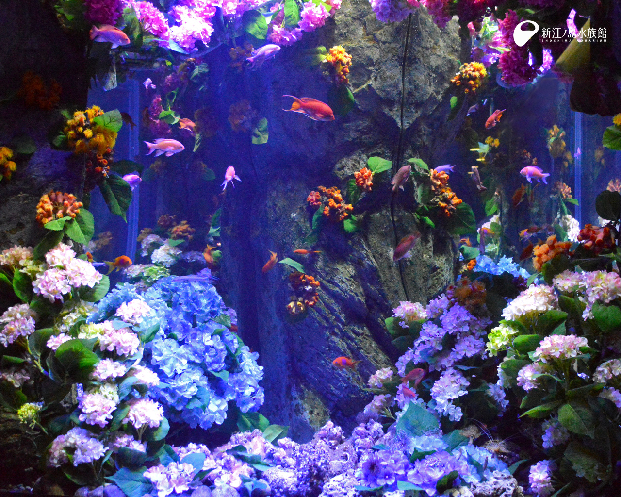 えのすい壁紙ギャラリー 新江ノ島水族館